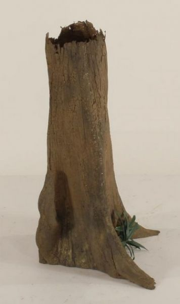 Cypress Stump-003