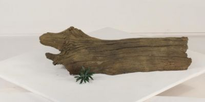 Floating Log FL-005